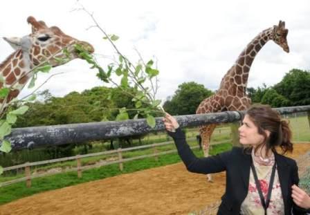 Великобритания: в зоопарк с ночевкой
