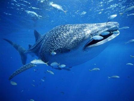 Россия: покормить акул с руки в московском океанариуме